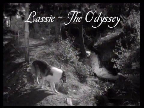 """Download Lassie - Episode #278-279-280 - """"The Odyssey - I, II, III"""" - Season 8 Ep.23-24-25  - Feb & Mar 1962"""