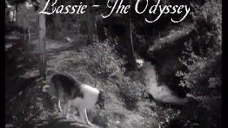 """Lassie - Episode #278-279-280 - """"The Odyssey - I, II, III"""" - Season 8 Ep.23-24-25  - Feb & Mar 1962"""