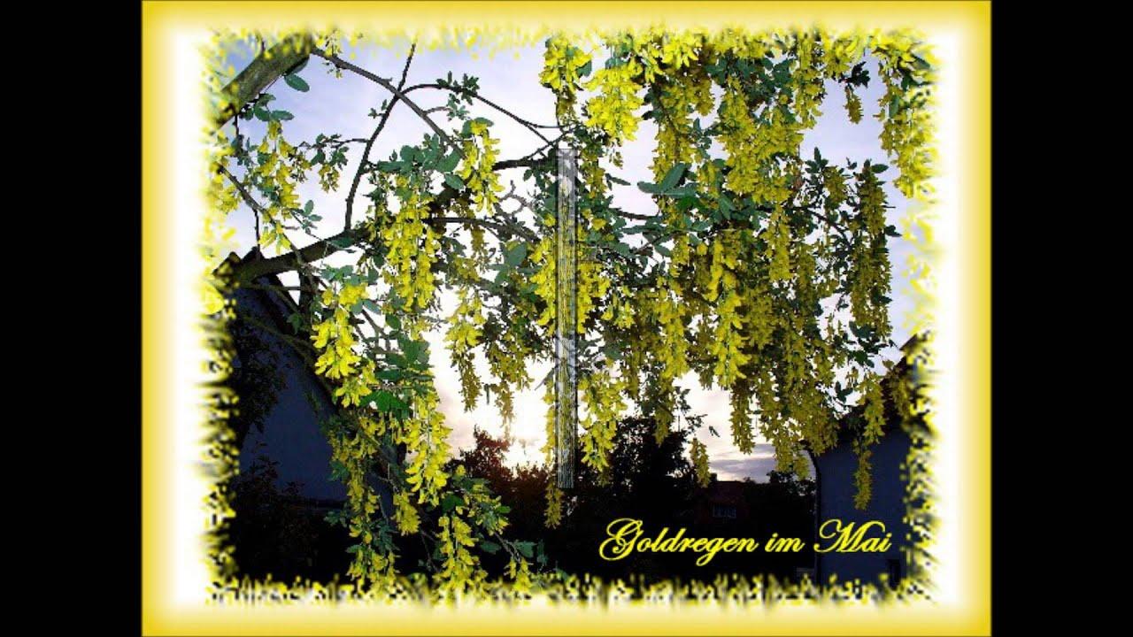 Gartenbilder 2013a Youtube