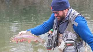 Arkansas River Dry Fly Eating Rainbow