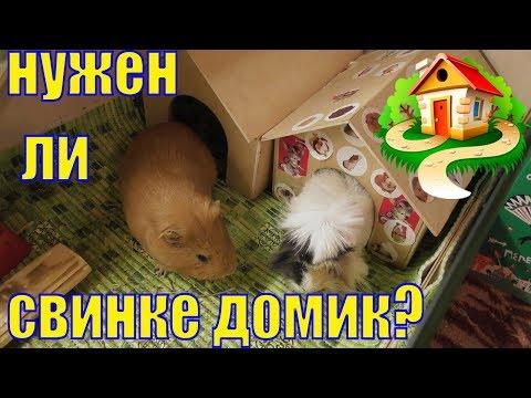 Домик для морской свинки/Нужен ли свинкам домик/Домик для грызунов/Елена и зверята