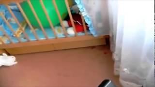 Кролик лопнул шар и ауел! ПРИКОЛ