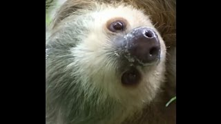 3 Things You Didn't Know About Sloths