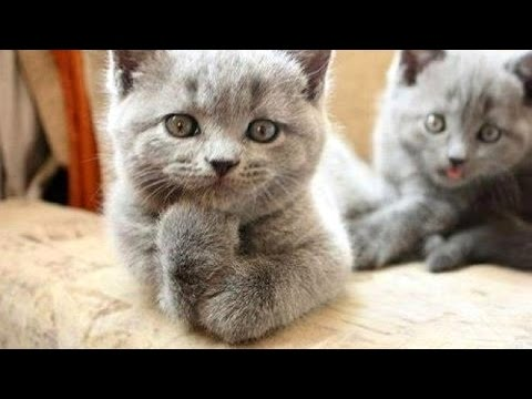 What could possibly be more entertaining and funny than animals - Super funny animal compilation