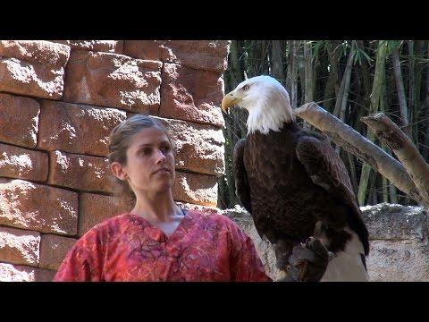 Flights Of Wonder - EXOTIC BIRD SHOW - Animal Kingdom - Disney World - Multi Angle PANDAVISION