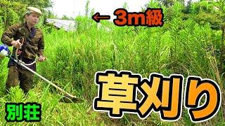 半年ぶりの別荘草刈りしたら大変な物発見!!【ダンテの森】 PDS