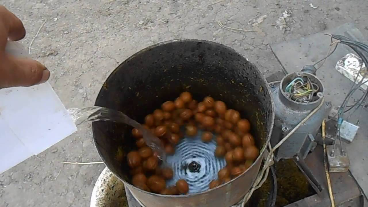 Почистить орехи от кожуры, как почистить грецкие орехи от зеленой кожуры своими руками и не запачкаться. Наш опыт, советы. Фото + видео. Чистка грецких орехов.