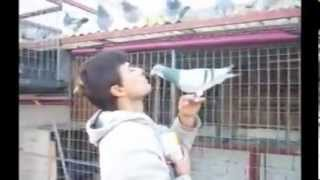 Pigeon Racing Training and education. How to Pigeon feed