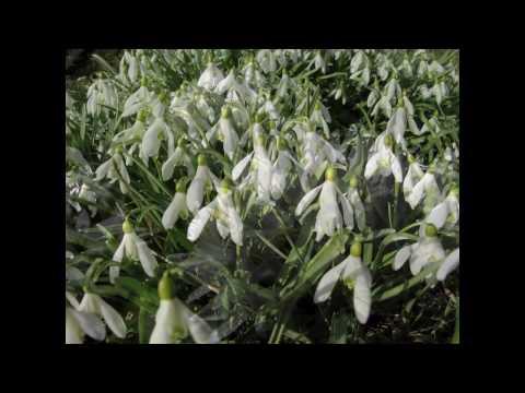 Die 4 Jahreszeiten - Der Frühling