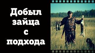 Охота на зайца с Русским охотничьим спаниелем