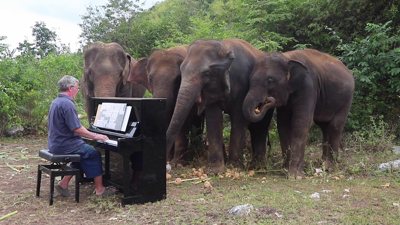 Beethoven Pastoral Symphony On Piano For Elephants Youtube
