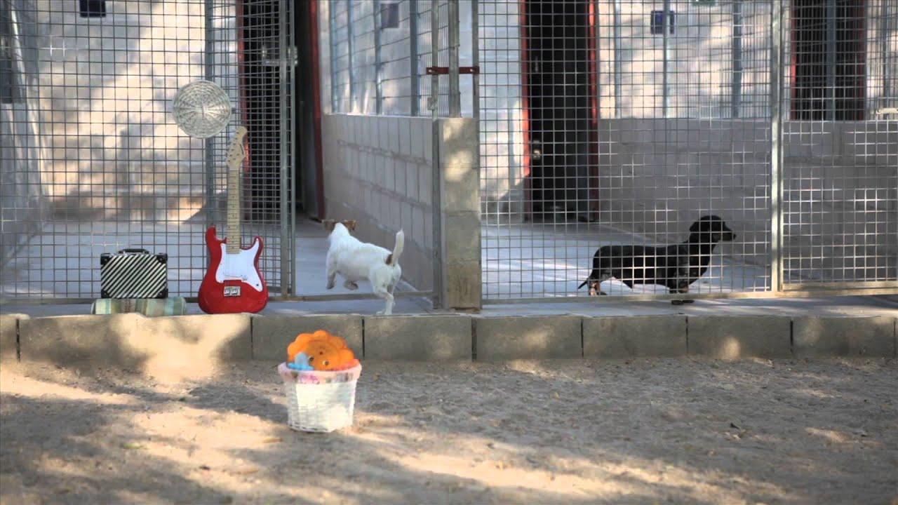 Residencias caninas madrid granja la luna hotel de for Residencia el jardin madrid