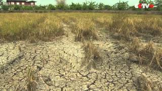 Drought Causes Water Shortage in Thailand, Affecting Crop Output