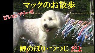 愛川公園のつつじ祭りが翌日(4月29日)からだったので混雑もなくゆ...