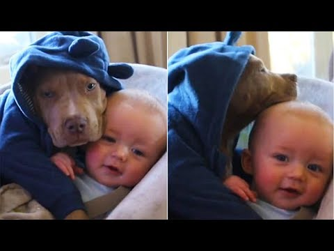 Dog love Baby | Try Not To Laugh Dog Playing Swing With Baby
