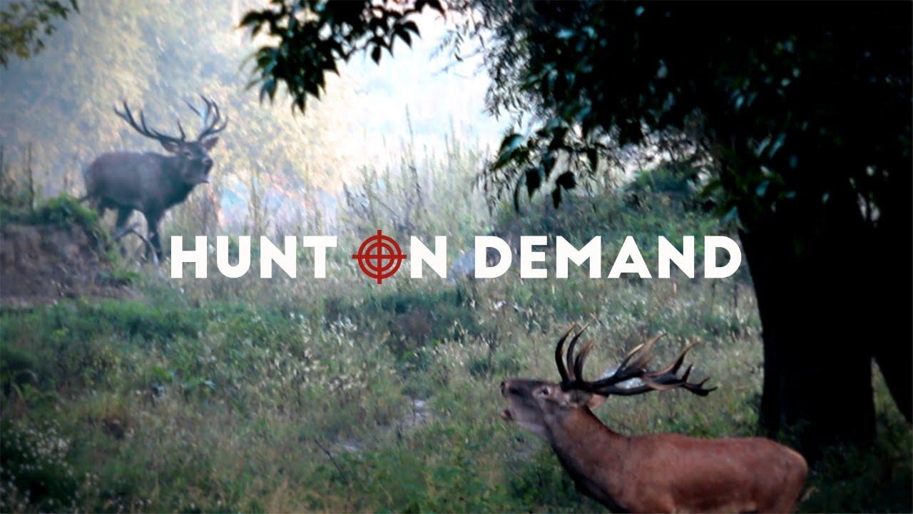 Jagd Videos