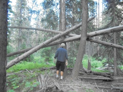 World Bigfoot Radio #23 ~ The Tree Structure Mystery/Rich Soule