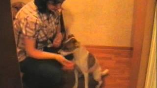видеоурок3 таблетки уколы.wmv(Этот ролик о том, как лечить собаку, чтобы это способствовало ее доверию к хозяину, а не пугало. Приучение..., 2011-06-27T21:13:10.000Z)