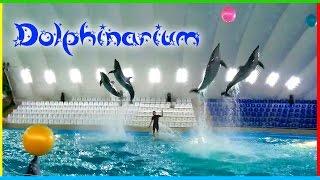 ШОУ С ДЕЛЬФИНАМИ 🐬 Харьковский дельфинарий Немо