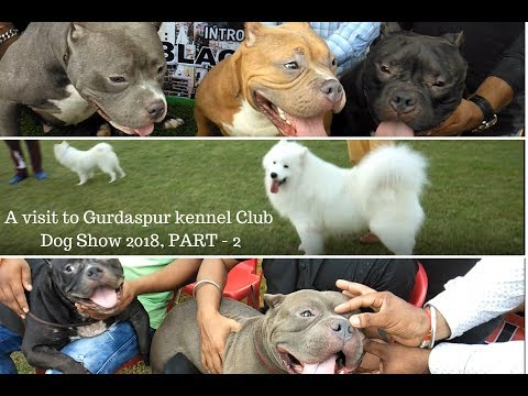 PART - 2, A visit to Gurdaspur kennel Club Dog Show 2018, Ba