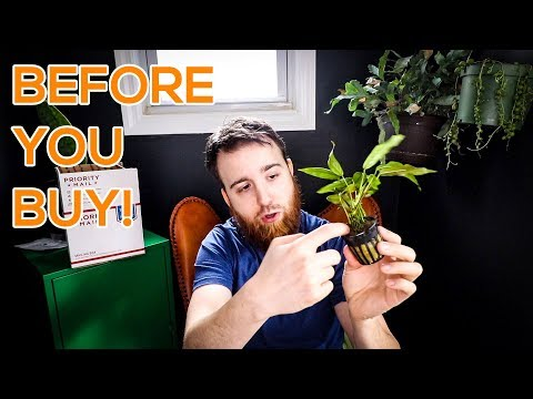 AQUARIUM PLANTS - BEFORE YOU BUY