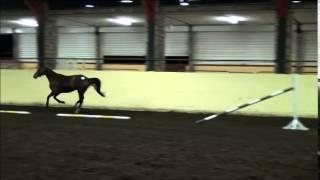 Isis de Mescam x Abaou Verte 2011 mare, Cavan loose jumping qualifier 14 10 14