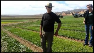 Harvesting Salad Mix Through The Ages With Earl's Organic Produce
