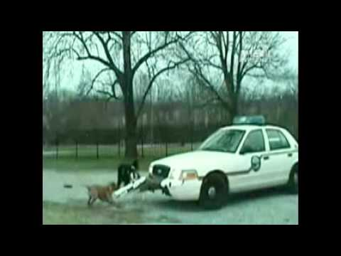 Dog Attacks Police Car