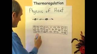 Thermoregulation 3, Physics of heat