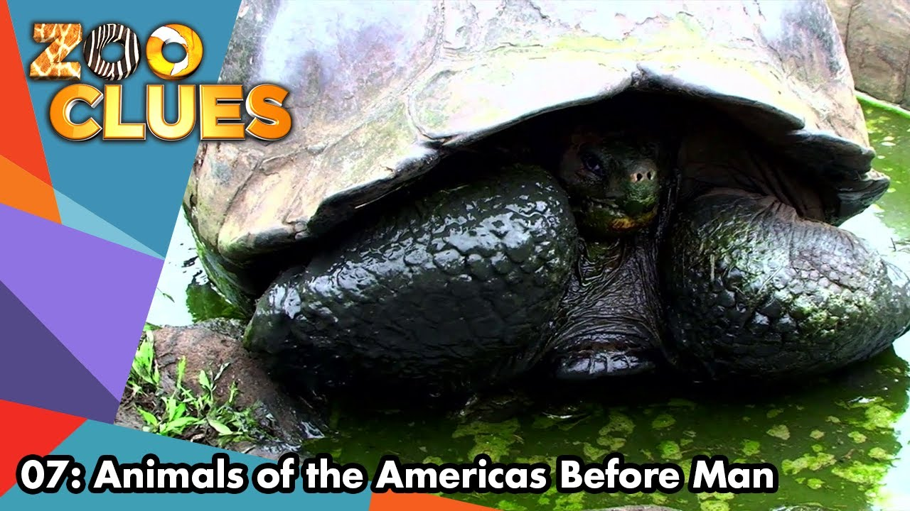 Download Zoo Clues | Season 2 | Episode 7 | Animals of the Americas Before Man | Bill Lloyd