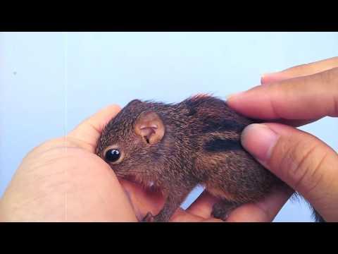 Video và hình ảnh con sóc đất (introduction to the squirrel)