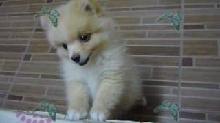 Download Video Miss My Son MP3 3GP MP4