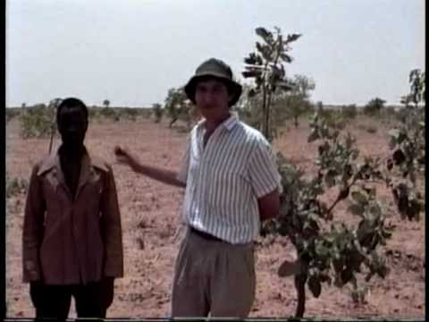 FMNR in Niger (Part 1)