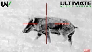 Night Vision Hog Hunting with Tracers | Flir PTS536 Pulsar Trail XP50 & Eotech LWTS