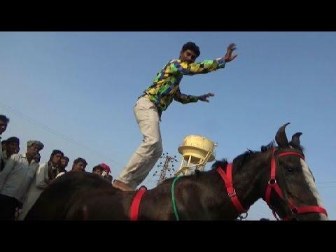 घोड़े पर डांस : खतरनाक और मनोरंजक : Man Dancing On Marwari Horse - Pushkar Fair Mela- Ajmer
