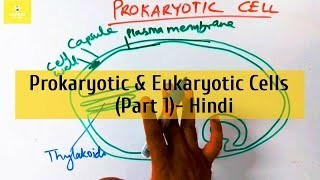 Prokaryotic and Eukaryotic Cells (in Hindi) - Part 1