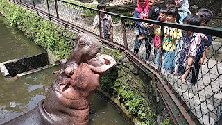 Wisata Jogja | Kebun Binatang Gembira Loka by Keluarga Arif