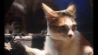 КОШКИ. CATS (ДОКУМЕНТАЛЬНЫЕ ФИЛЬМЫ)