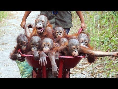 Забавные и милые обезьянки. Видео NEW
