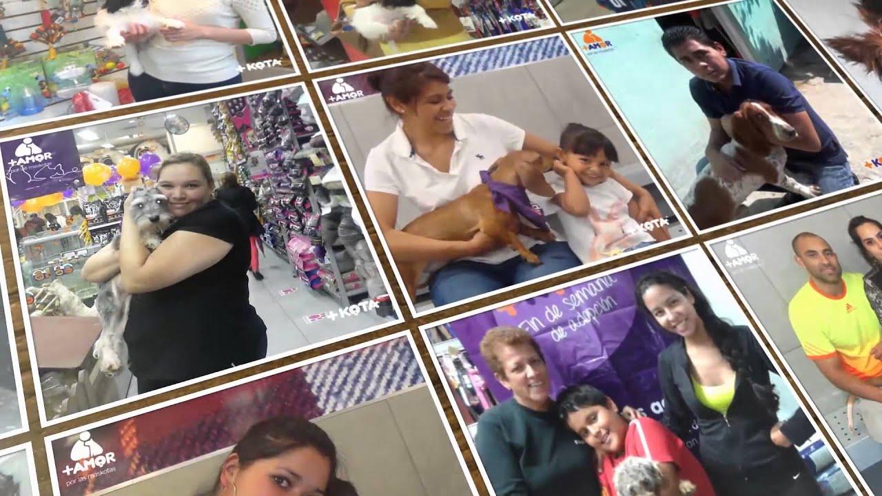 Conoce las metas de adopción y donaciones de +Amor y tiendas +KOTA al 2014