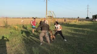 Немецкие Боксеры Тайсон и Сири защита хозяина