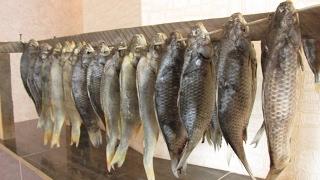 Таранка зимой! Как солить и сушить рыбу