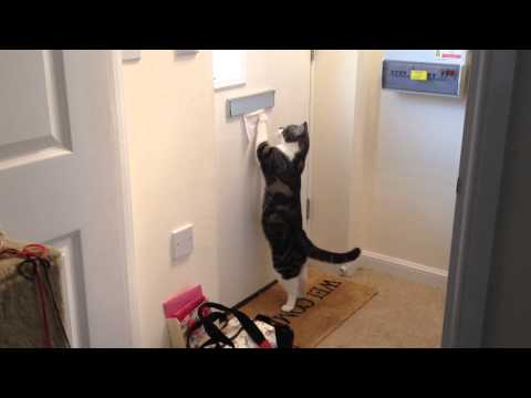 cat collecting the post – SMART CAT!!! – Postman Cat