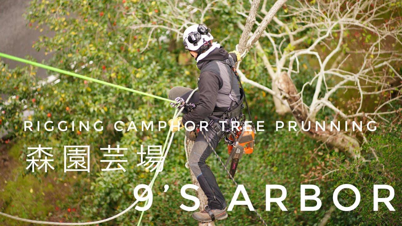 Rigging Camphor Tree Pruning  by 9's arbor and Mori Gardening.inc. / SRT DDrt System / Arborist