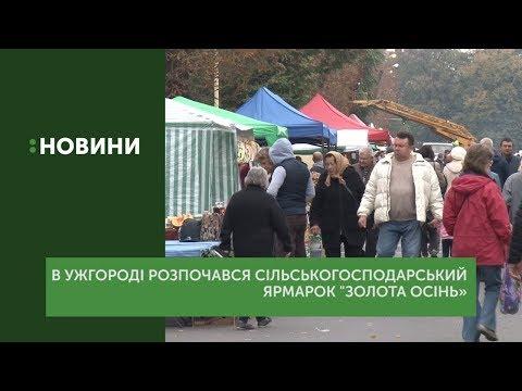 Ярмарок «Золота осінь» розпочався в Ужгороді