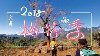 【旅遊VLOG】| 2018 六龜梅花季