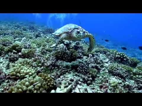 Plongée Polynésie avec Top Dive à Rangiroa, Fakarava et Bora Bora