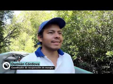 Recuperar manglares