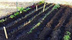 The Beginning | Spring Vegetable Garden