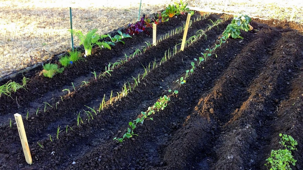The Beginning Spring Vegetable Garden YouTube